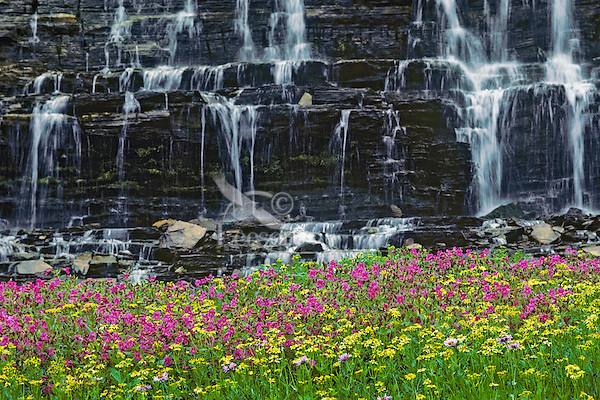 Wildflowers and small summer waterfall in alpine meadow of Glacier National Park, Montana.
