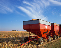 Bureau County, IL<br /> Grain wagons and combine harvesting corn