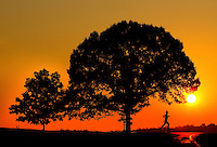 A runner exercises along a quite road as the sun rises in the distance. Runner and trees are silhouetted.