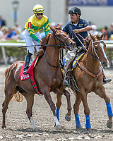 HALLANDALE BEACH, FL - MAR 31:Therapist #1 trained by Christophe Clement with Irad Ortiz, Jr. in the irons prepares to run and win the Cutler Bay (G3) at Gulfstream Park on March 31, 2018 in Hallandale Beach, Florida. (Photo by Bob Aaron/Eclipse Sportswire/Getty Images)