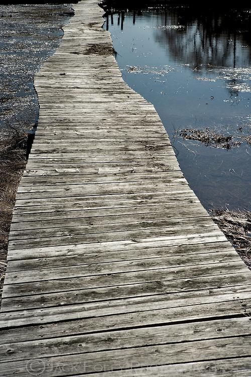 Wooden bridge path over wetlands.