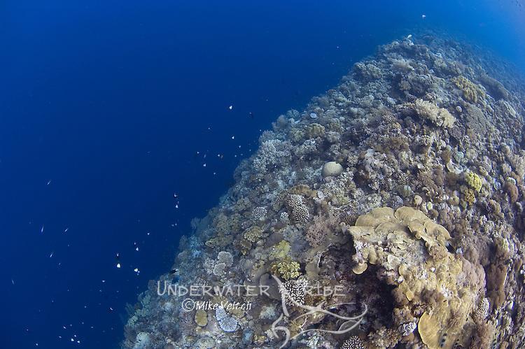 Vertical drop off of over 2000m, Shark Cave, Layang Layang atoll, Sabah, Borneo, Malaysia, South China Sea, Pacific Ocean