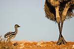 Australia Landscapes/Wildlife
