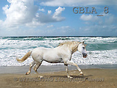 Bob, ANIMALS, collage, horses, photos(GBLA8,#A#) Pferde, caballos