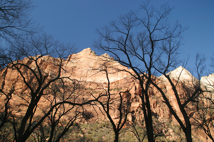 Canyon walls rising above cottonwood trees, Zion National Park, Washington County, UT