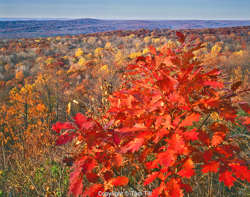 Autumn Maples and Forest, Stokes State Forest, Appalachian Mountains, New Jersey Near Appalachian