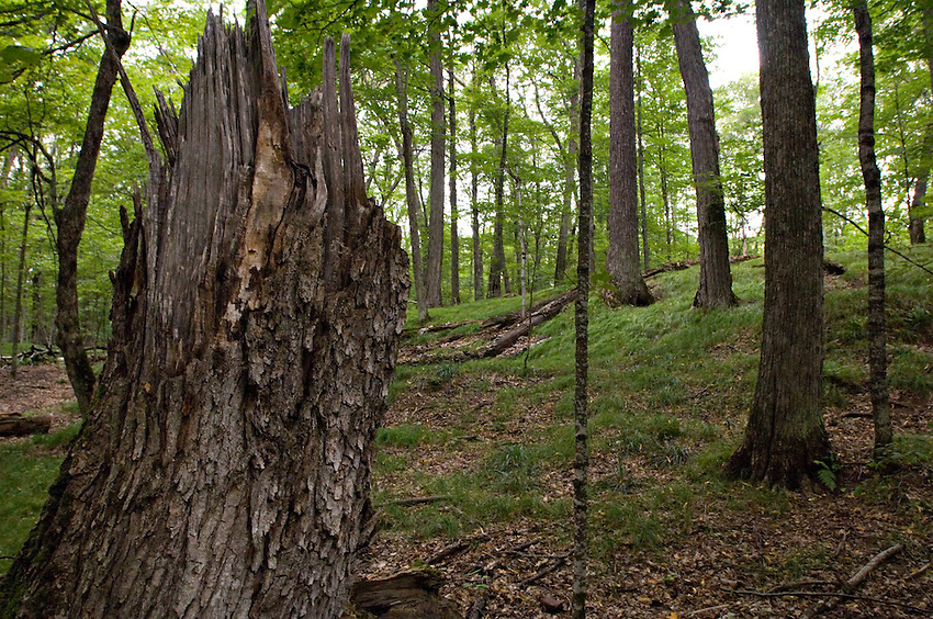 Mature hardwood forest at Sylvania Wilderness Area of Ottawa National Forest near Watersmeet Michigan.