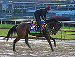 November 1, 2018 : Clemmie, trained by Aidan O'Brien, trains for the Breeders' Cup Mile at Churchill Downs on November 1, 2018 in Louisville, KY. Jessica Morgan/ESW/CSM