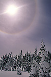 22 degree halo caused by refracted light in ice crystals in the high atmoshere, above snow covered trees in winter, near Donner Summit, California