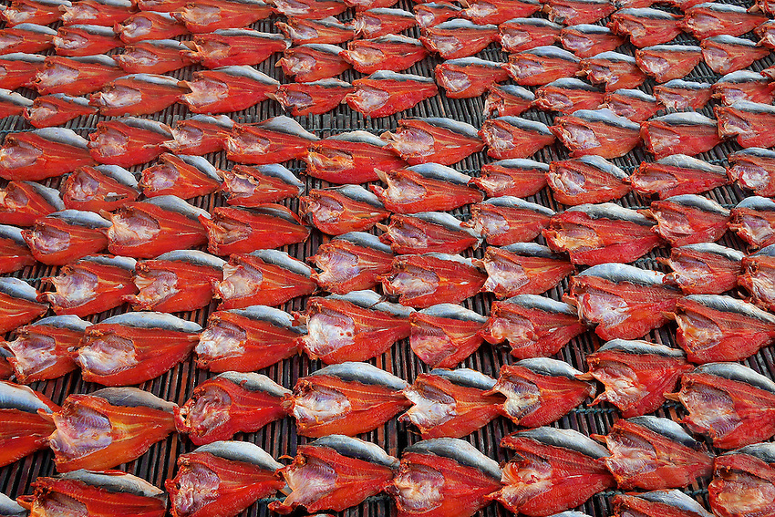Near the provincial town of Battambang fish is been dried in the open and later sold at markets. Cambodia