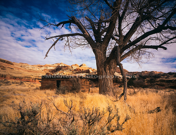 Kirk's Cabin,Salt Creek Canyon,Canyonlands National Park,Utah