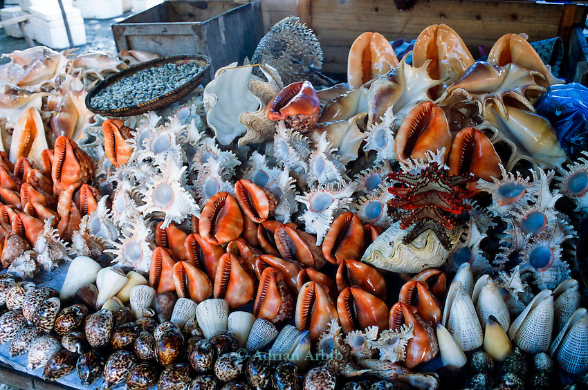 rare sea shells on  sale in Dar e Salaam market , Tanzania.