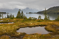 Tundra and wetland shores along College Fjord in Prince William Sound, Alaska.