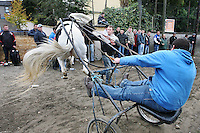 4/10/2010.  A sulky rider almost loses control of his horse in the trotting lane at the Ballinasloe Horse Fair, Ballinasloe, Ireland. Picture James Horan