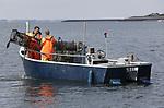 Foto: VidiPhoto<br /> <br /> YERSEKE - Het seizoen voor de kreeftenvisserij is in volle gang en duurt van half maart tot half juli. De zwagers Maurice Boone en Markus Wijkhuis uit Yerseke runnen samen een vissersbedrijf met twee kotters en een werkvlet. Naast het kweken van oesters, vissen ze op kreeften en paling. Volgens de vissers zijn er teveel vergunninghouders, waardoor de visserijdruk op de Oosterschelde is toegenomen en de vangsten tegenvallen. Ondanks dat de horeca gesloten is, staan de prijzen voor de gewilde Oosterschelde kreeft niet onder druk.