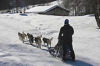 Europe/France/Rhone-Alpes/73/Savoie: St-Martin-de-Belleville randonnée en traineau à chiens avec Emmanuel Colire et son attelage