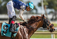 OLDSMAR, FL - JANUARY 21: Money Tree #9 (turquoise cap), ridden by Edwin Gonzalez, wins the 4yr olds and up claiming race, on Skyway Festival Day at Tampa Bay Downs on January 21, 2017 in Oldsmar, Florida. (Photo by Douglas DeFelice/Eclipse Sportswire/Getty Images)