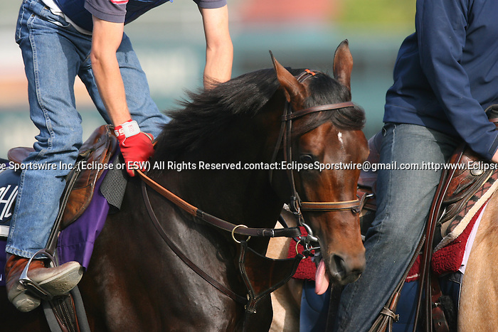 05 November 2009: Colonel John on track in preparation for the Breeders' Cup at Santa Anita Park