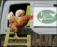 BNPS.co.uk (01202 558833)<br /> Pic: PhilYeomans/BNPS<br /> <br /> Pampered hens emerge from their Eglu coops.<br /> <br /> Fowlty Towers - Egg-ceptional new hotel for hens.<br /> <br /> The boom in hen keeping across Britain has led a canny Kent lady to spotting a gap in the market for a deluxe hotel for punters beloved poultry whilst they jet off on their summer hols. <br /> <br /> Julie Smith from Cowden is inundated with requests for 'rooms' at 'Fowlty Towers', with customers booking months in advance to secure a spot for their prized birds. <br /> <br /> Julie's all-inclusive resort costs a poultry &pound;7 a night for each run, with round the cluck service including all food and drink.