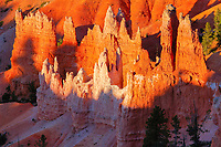 Queen's Garden, at sunrise, Sunrise Point, Bryce Canyon National Park, Utah, USA