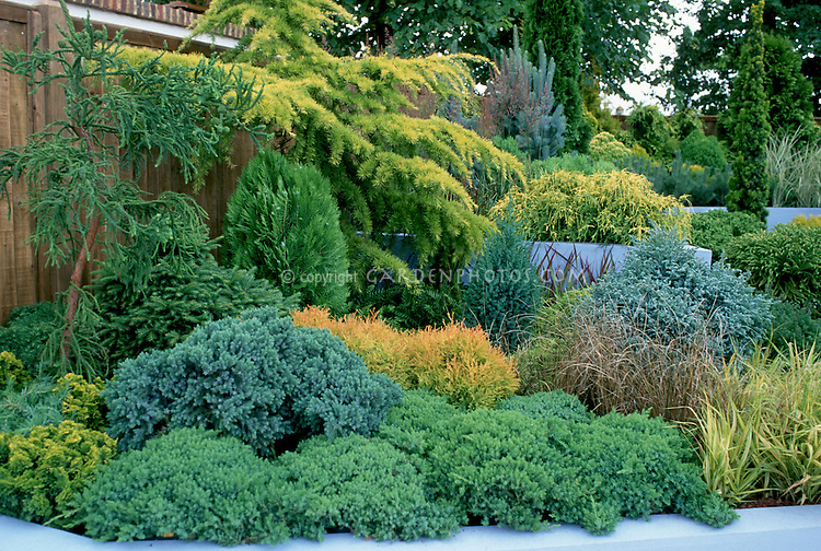 different kinds of evergreen trees and shrubs  mixed  in