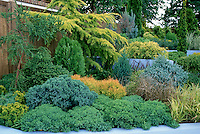 Fixing a problem site: Evergreen shrub garden on hill slope with Conifers, evergreens, ornamental grass in blue-walled raised garden in different levels, sloped hillside solutions with foliage plants and year round interest