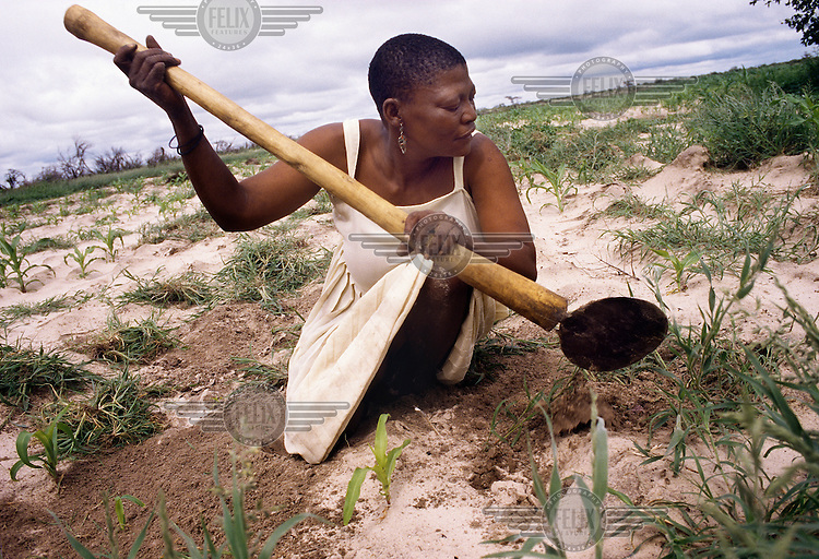 A San woman prepares land for cultivation in the Molapo settlement before the entire San population were removed, between 1997 and 2002, to a new location outside the Central Kalahari Game Reserve.