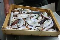 Europe/Italie/Ligurie/Imperia: Poissons à  la criée du port de pêche d'Imperia