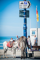 Aberystwyth, Ceredigion, West Wales, UK Monday 29th August 2016. UK Weather: People coming out and taking advantage of the fine Bank Holiday weather temperatures are expected to hit 19 degrees with clear skies. Two donkeys take a well earned rest by the seafront.
