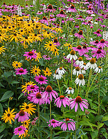 Southwest Harbor, Maine: Flowering gardens and pathways in the Charlotte Rhoades Park and Butterfly Garden: Featuring rudbeckia, echinacea and liatris