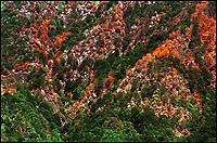 Incendio con il Corpo Forestale dello Stato, 2004 Varallo Sesia, Canadair