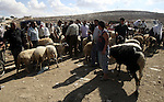 Palestinians trade goats at a local cattle market ahead of Muslim festival of Eid al-Adha, in the West Bank city of Nablus, on October 25, 2012. Muslims around the world prepare to celebrate Eid Al-Adha, which according to the lunar calendar will be celebrated on October 26, by slaughtering goats, sheep, camels and cattle, commemorating Abraham's willingness to sacrifice his son Ismail on God's command. Photo by Wagdi Eshtayah