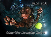 REALISTIC ANIMALS, REALISTISCHE TIERE, ANIMALES REALISTICOS, dogs, paintings+++++SethC_Nico_IMG_2204rev_PRINT,USLGSC51,#A#, EVERYDAY ,underwater dogs,photos,fotos ,Seth