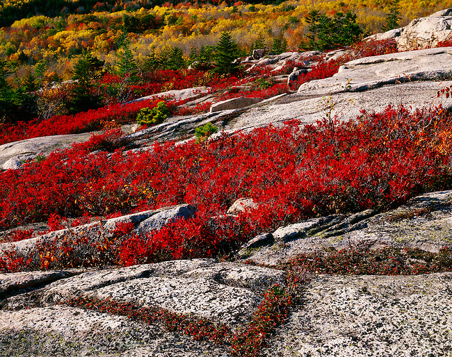 Gorham Mountain summit; granite outcroppings; huckleberry; Acadia National Park; Maine