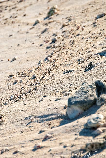 Sand on the beach in Kiritimati in Kiribati