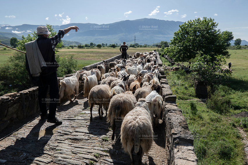 Albania. Gjirokastër. Shepherd and sheeps cross an old stone bridge on their way to pastures. Gjirokastër is a city in southern Albania on a valley between the Gjerë mountains and the Drino, at 300 metres above sea level. 24.05.2018 © 2018 Didier Ruef