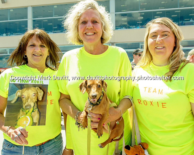 Prairie Meadows celebrated Fathers Day with its first ever first Wiener Dog Races. The four-legged competitors and their owners hit the starting gate in a 30-yard dash for cash prizes and a shot at the Wiener&rsquo;s Circle. Team Roxie showed their enthusiasm for the race day. They are, from left, Desiree Brown, Kim Comer, her daughter <br /> Ashley Comer and of course Roxie The Doxie.