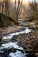 A small stream winds through Richard T. Anderson Conservation Area in early spring. The conservation area is on the shore of the Minnesota River adjacent to the Minnesota Valley National Wildlife Refuge.