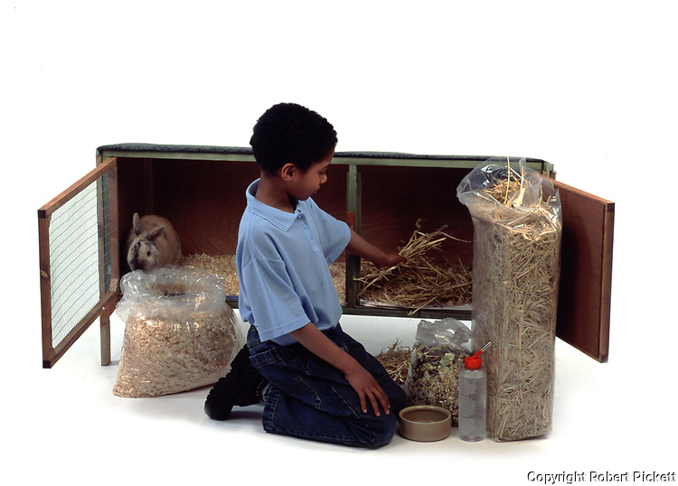 Young Boy preparing hutch for Pet Rabbit, Sable Colour, aged 10 years old, domestic, white background, cut out, studio,
