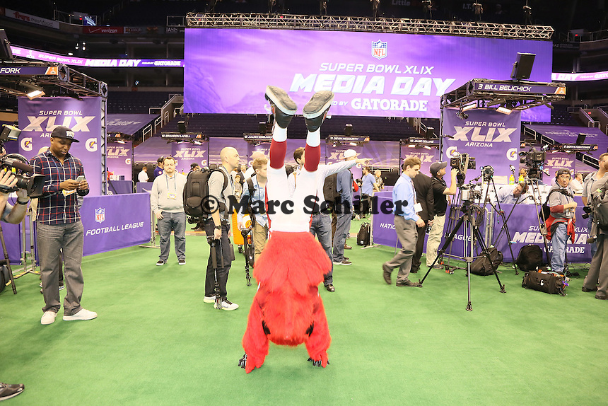 Maskottchen der Arizona Cardinals Big Red sorgt für Stimmung - Super Bowl XLIX Media Day, US Airways Center, Phoenix
