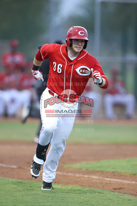 Paul Kronenfeld #36 of the AZL Reds runs to first base during a game against the AZL Brewers at the Cincinnati Reds Spring Training Complex on July 5, 2014 in Goodyear Arizona. AZL Reds defeated the AZL Brewers, 7-2. (Larry Goren/Four Seam Images)