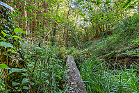 BNPS.co.uk (01202 558833)<br /> Pic: Symonds&Sampson/BNPS<br /> <br /> A log bridge provides access...<br /> <br /> £125,000 - For your own idyllic rustic hideaway...<br /> <br /> Fancy the unique chance to own a remote woodland shack in its own private valley near Lyme Regis in Dorset?<br /> <br /> The timber chalet, with a pond, decking and a log bridge across a stream, is buried in the middle of 10 acres of private woodland near the seaside resort.<br /> <br /> The primitive but eco-friendly chalet can be slept it overnight but can't be used as a permanent residence.