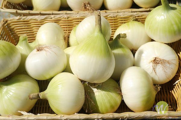 Williamsport Growers Market..Onions