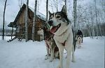 Randonnée en traineau dans le parc des Hautes Gorges. Rivière malbaig dans la région de Charlevoix. Quebec en hiver. Canada.
