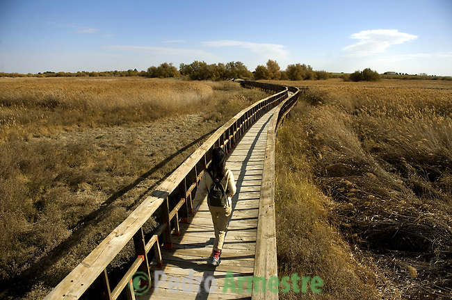 A visitor walks on a wooden bridge in the national park of Las Tablas de Daimiel, in Ciudad Real on November 16, 2009. The European Union launched an investigation into Spanish wetland that has turned bone dry through mismanagement of water resources  from areas where fish once swam. The EU wants the Spanish government to explain how it plans to save Las Tablas de Daimiel National Park.The park, one of Spain's few wetlands, is classified as a UNESCO biosphere site and an EU-protected area because of its birdlife. But it has been drying up for decades, largely because of wells dug by farmers on the edges of the park to tap an aquifer that feeds the wetland's lagoons. Many of the wells are illegal. Environmentalists call this case a particularly glaring example of how a natural resource can be abused. (c)Pedro ARMESTRE