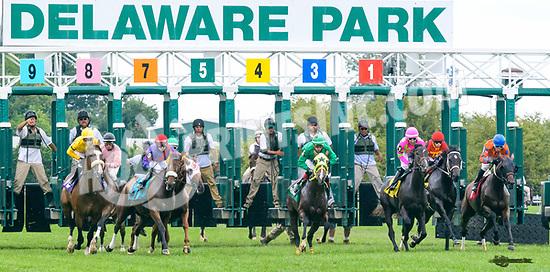Mzima Springs winning at Delaware Park on 8/12/17