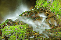 Detail of Dickson Falls<br /> Fundy National Park<br /> New Brunswick<br /> Canada