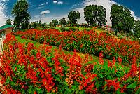 India-Kashmir-Srinagar-Shalimar Gardens