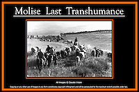 Last Transhumance