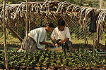 Women tend seedlings in a tree nursery in Santa Maria Delores, Guatemala. The nursery is part of a reforestation project in a region heavily reliant on fuel wood.  It is supported by EcoLogic Development Fund.